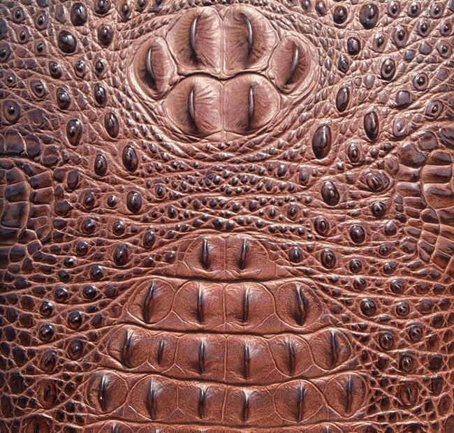 Túi da cá sấu: Tất tần tật những điều cần biết